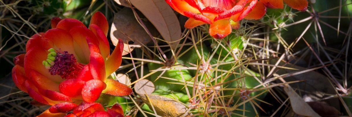 thorn in the flesh Tope Keku Professional Life Coaching for Christian Women Image